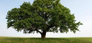 Как нарисовать красивое дерево