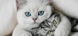 Как лучше назвать взрослую кошку