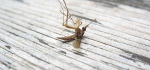 Как защититься от комаров на природе