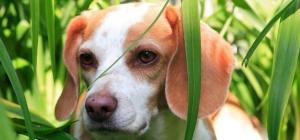 Как защитить собаку от клещей летом