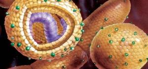 Что такое гепатит А