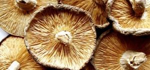 Как приготовить грибы в сметане