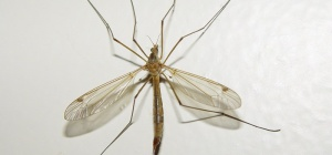 Как обработать комариные укусы