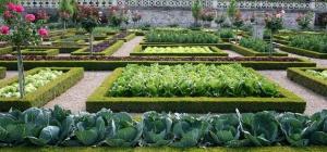 Как вырастить овощи на своём огороде