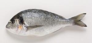 Как сделать паштет из припущенной рыбы