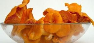 Как собирать грибы лисички
