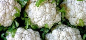 Как выращивать цветную капусту