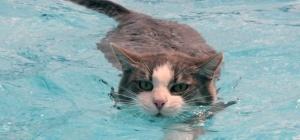 Зачем и как купать кота