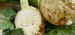 Лечебные свойства корня сельдерея