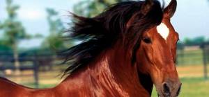 Как слепить пластилиновую лошадку
