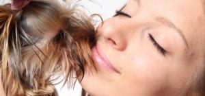 Как собака лечит человека?