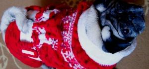 Как связать свитер с узором для собаки