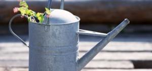 Полив растений своими руками: как правильно это делать