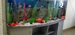 Фонтан, аквариум или водопад: что выбрать для дома