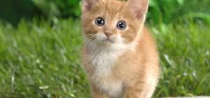 Котенок линяет - можно ли с этим бороться