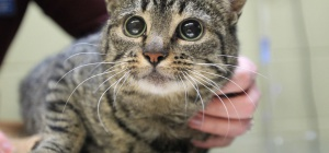 Как вылечить запор у кота или кошки