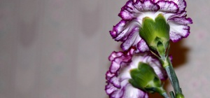 Какие цветы считаются траурными
