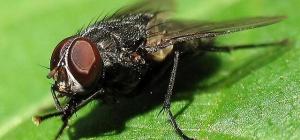 Чем лучше всего травить мух