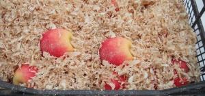 Как хранить яблоки поздних сортов