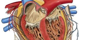 Что такое врожденный порок сердца