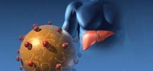 Кто такой носитель гепатита