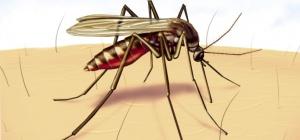 Как избавиться от комаров с помощью запаха