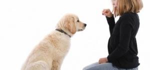 Как заложить любовь к обучению у щенков