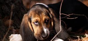 Как оказать первую помощь собаке после укуса клеща