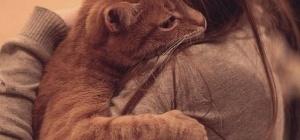Что делать, когда умирает кот