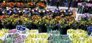 Как открыть цветочный магазин