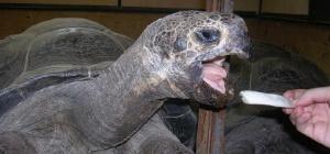 Как дрессировать черепах
