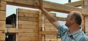 Грибок древесины: профилактика и способы борьбы