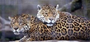 Отдыхаем с детьми: выходные в зоопарке
