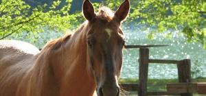 Как подготовиться к походу на лошади