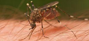 Как снять раздражение от укуса насекомого