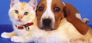 Где можно оставить на время отпуска собаку и кошку