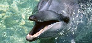 Где можно поплавать с дельфинами в Москве