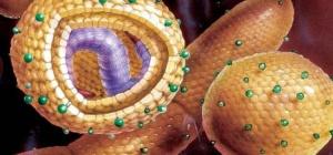 Как гепатит влияет на беременность