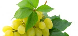 Все про виноград: как ухаживать