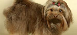 Какая собака живет дольше всех