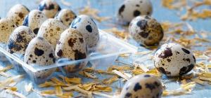 Как едят перепелиные яйца сырыми