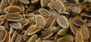 Семена укропа как мочегонное средство