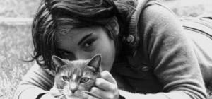 Важные моменты содержания кошки в доме