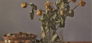 Способы засушки различных сортов растений