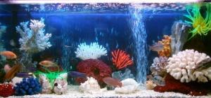 Каких рыб можно держать