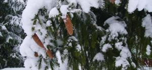 Как идет снег