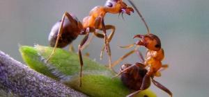 Как избавиться от насекомых в частном доме