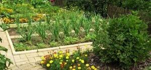 Как экономично и красиво разместить грядки в огороде