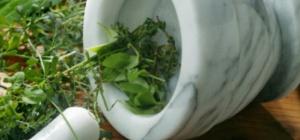 Целебные травы для печени: особенности применения