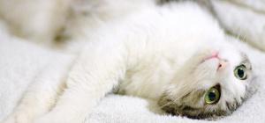 Как лечить коронавирус у кошек